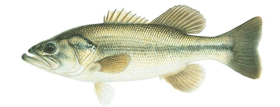 Fish Long-awaited rains in late 2016-17 have created a unique
