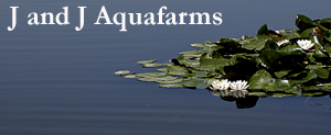 J and J AquaFarms